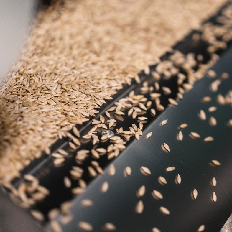 Close-up, delicious grain being sorted.